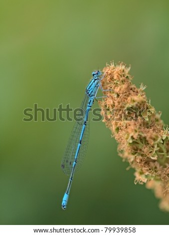The blue dragonfly on the pond - stock photo