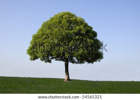 The blue sky in grassland and one tree - stock photo