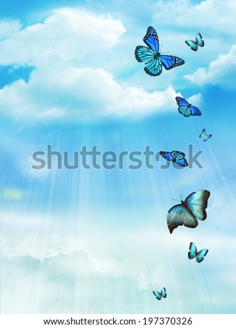 The blue sky with butterflies, background - stock photo