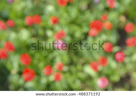 The blurred background with red flowers.
