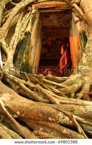 The bodh tree on the roof of Bangkoog Temple in Thailand. - stock photo