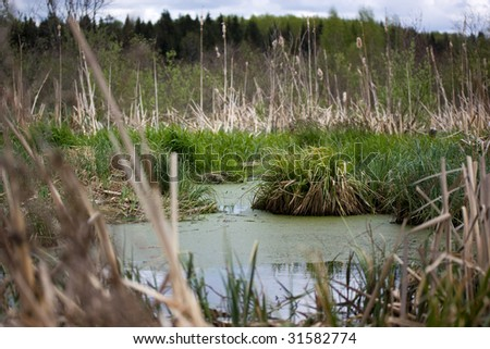 the bog with tussock-grass - stock photo