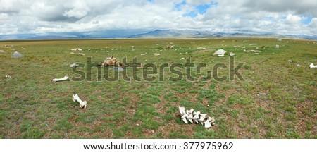 The bones of dead animals in the desert - stock photo