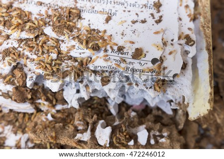 The book with termites damage