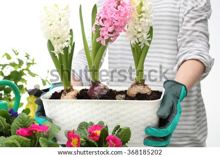 The box with flowers, planting potted plants