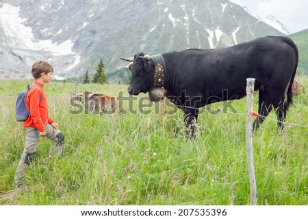 the boy and Alpine cow in the mountains - stock photo