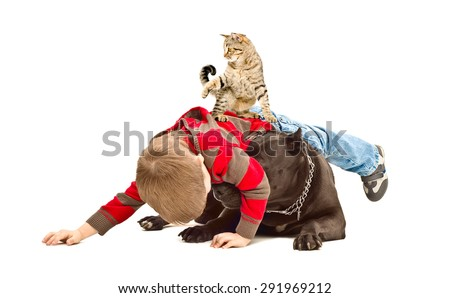 The boy, dog and cat fun playing together isolated on white background - stock photo
