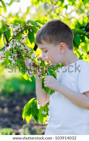 the boy smelling flowers on a blossoming tree in a garden - stock photo