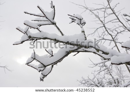 The branch is covered by snow. A thin ice layer. Soft illumination.
