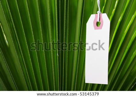 The branch of a palm tree as a background on which hangs a label.