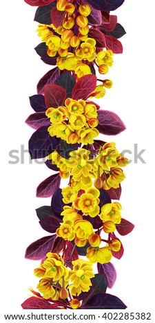 The branch of blossoming barberry. Spring flowering. Yellow flowers. Vertical floral border. Pattern, seamless, isolation - stock photo