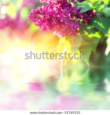 The branch of lilac blossoms. Background for the design theme for the spring - stock photo
