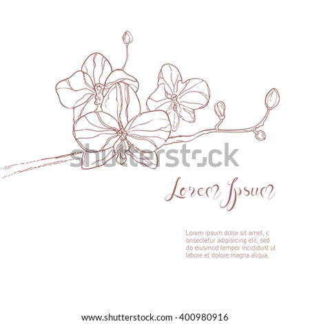 The branch of orchids flower in gentle pink color on White Background. The hand drawn ink sketch. Background with place for your text. Vintage style. Rasterized version. - stock photo