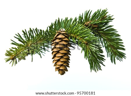 The branch of spruce and pine cone on white background - stock photo
