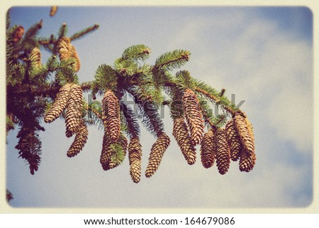 The branch of spruce and pine cone - vintage retro style. - stock photo