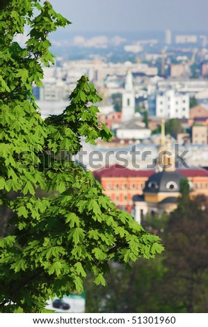 The branches of the chestnut over Kiev, Ukraine - stock photo