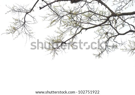 The branches on a white background - stock photo