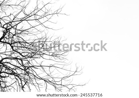 The branches on a white backgrounds. - stock photo