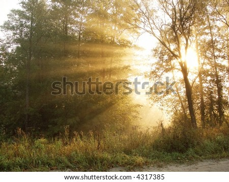 The bright beams of the sun reminding a crown, make the way through trees in a morning wood - stock photo