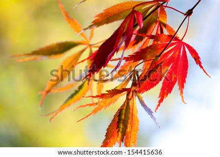 The bright colors of autumn trees. Autumn landscape. - stock photo