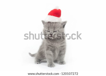 the British kitten in a cap on a white background - stock photo