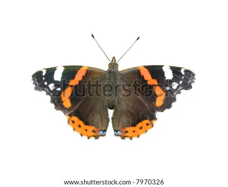 The brown butterfly isolated on a white background