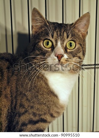 The brown cat and green his eyes. - stock photo