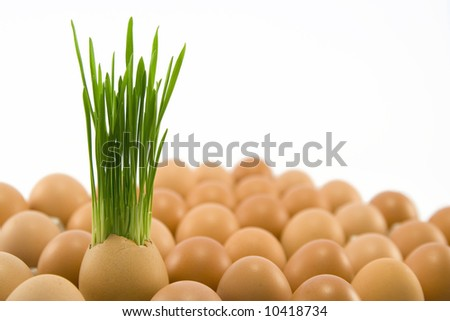the brown egg with growing grass among other eggs - stock photo