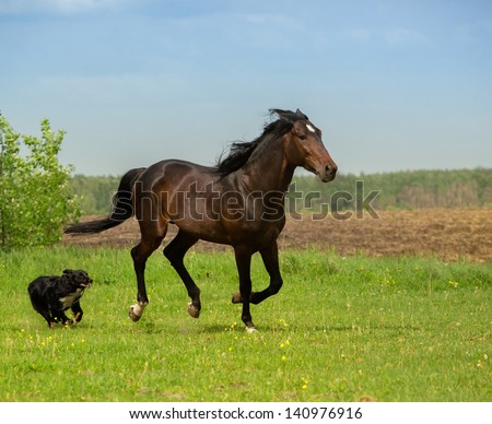 the brown horse and the dog