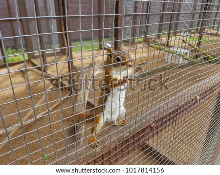 The brown quirrel in the zoo cage