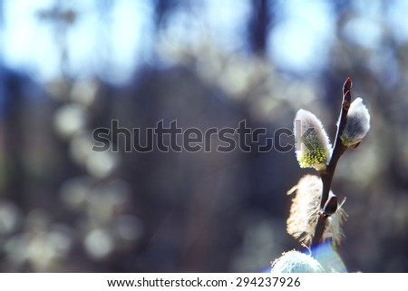The buds of plants before flowering in the garden - stock photo