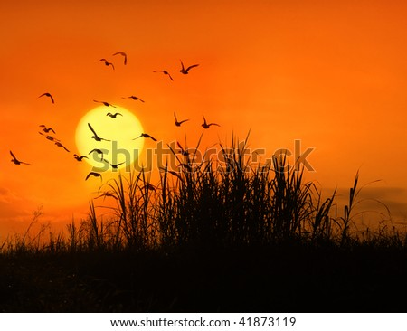 The bulrushes against sunlight over sky background in sunset with a flighting bird (See more birds and sunset backgrounds in my portfolio). - stock photo