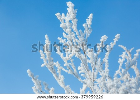 The bushes covered by hoarfrost on a background of the sky. Russia. Novosibirsk.
