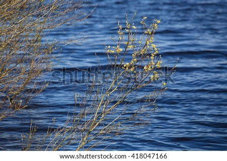 the bushes on the shore of lake