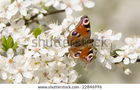The butterfly has arrived on a flower on a glade - stock photo