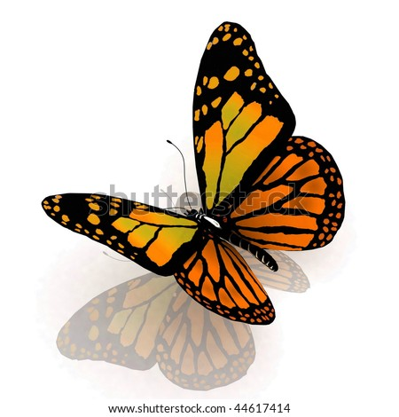 The butterfly of orange color
