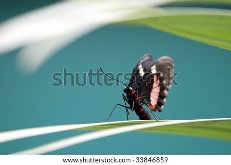 The butterfly on a leaf