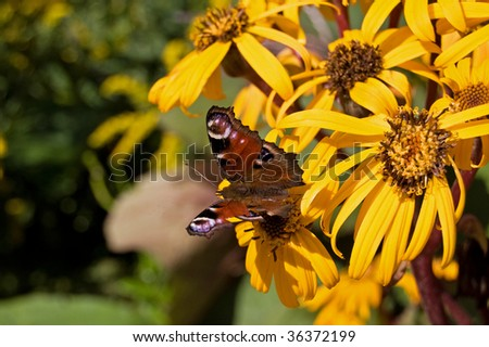 The butterfly on a yellow flower - stock photo