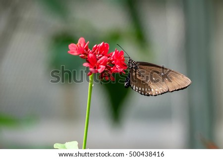 The butterfly perched on the flower.