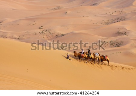 The camels brigade resting in the gobi desert of Inner Mongolia, China