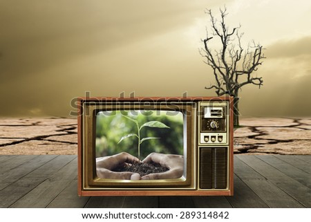 The campaign to reforest To reduce global warming,hands holding and caring a young plant on television or tv - stock photo