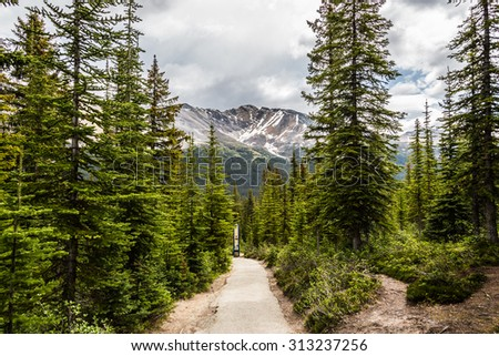 The Canadian Rockies walking trail by the forest. Green trees, alpine mountains with snow and some clouds - stock photo