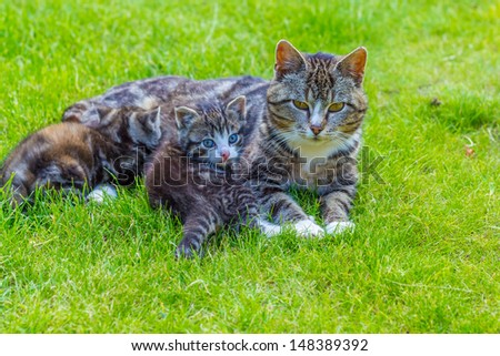 The caring cat with her ??young