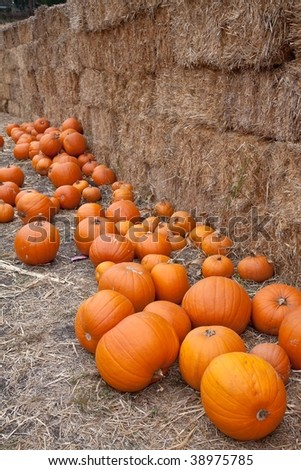 The carving of pumpkins is associated with Halloween in North America where pumpkins are both readily available and much larger- making them easier to carve than turnips. - stock photo