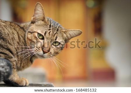 the cat - stock photo