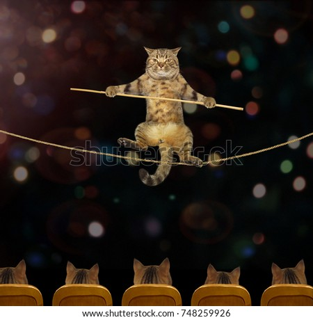The cat acrobat goes on a tightrope in the circus.