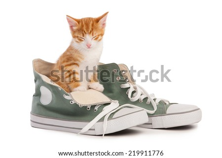 The cat and the shoes - stock photo