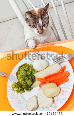 the cat at the table with food. - stock photo