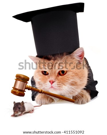 The cat caught the mouse.Ð¡at with judicial gavel.