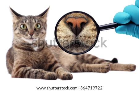 The Cat Expert. We explore cat. Veterinarian doctor making check-up of a cat. - stock photo